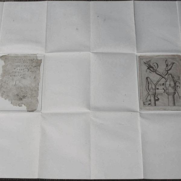 Amalia Del Ponte, Culturae: florum omnium varietas (nascita), 1977