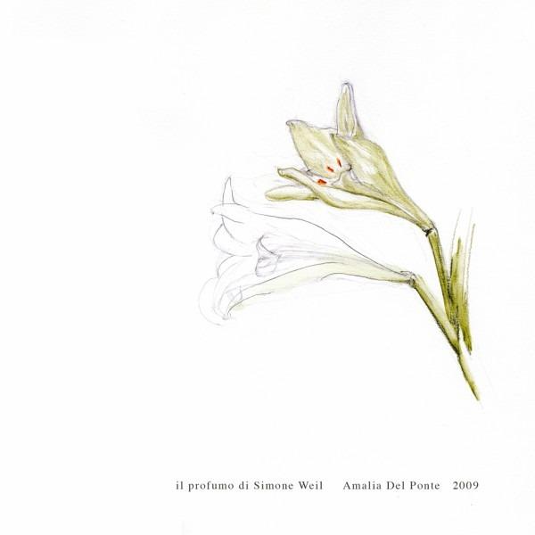 Amalia Del Ponte 2009 Il profumo di Simone Weil Lilium