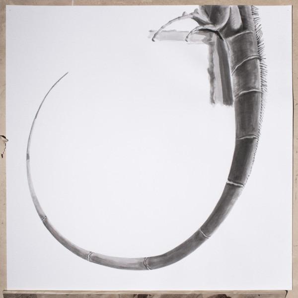 Amalia Del Ponte, Ars memorie, 2015, I di Iguana