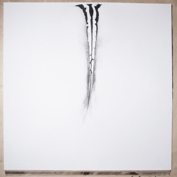 Amalia Del Ponte, Ars memorie, 2015, Z di zebra